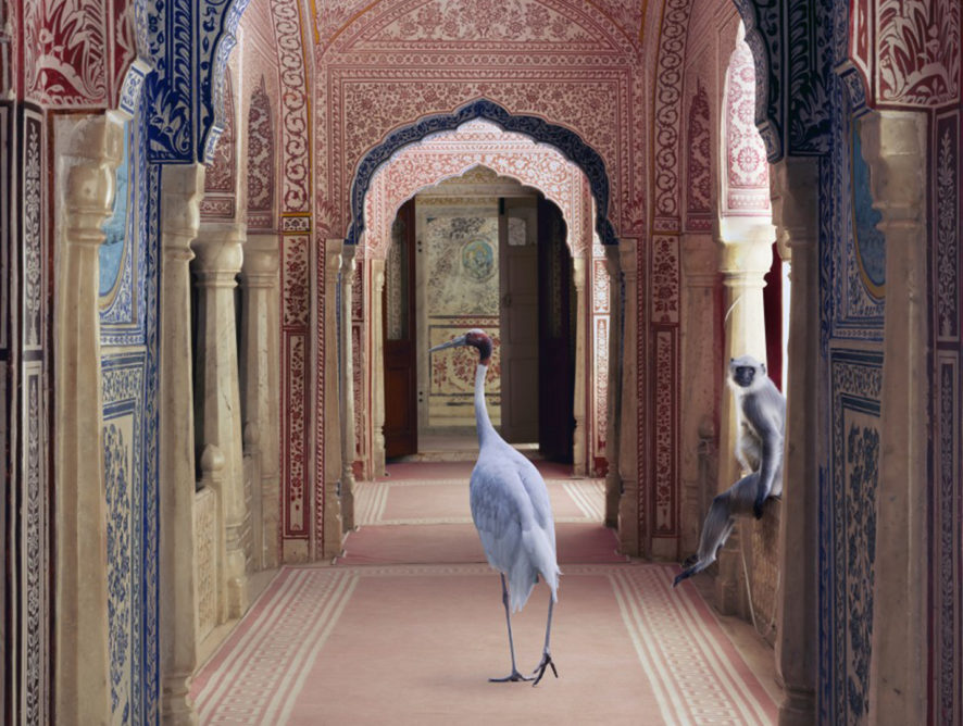 17 Stunning Photographs by Karen Knorr which give an Ode to India